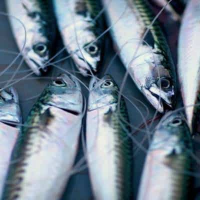 mackerel fishing trips