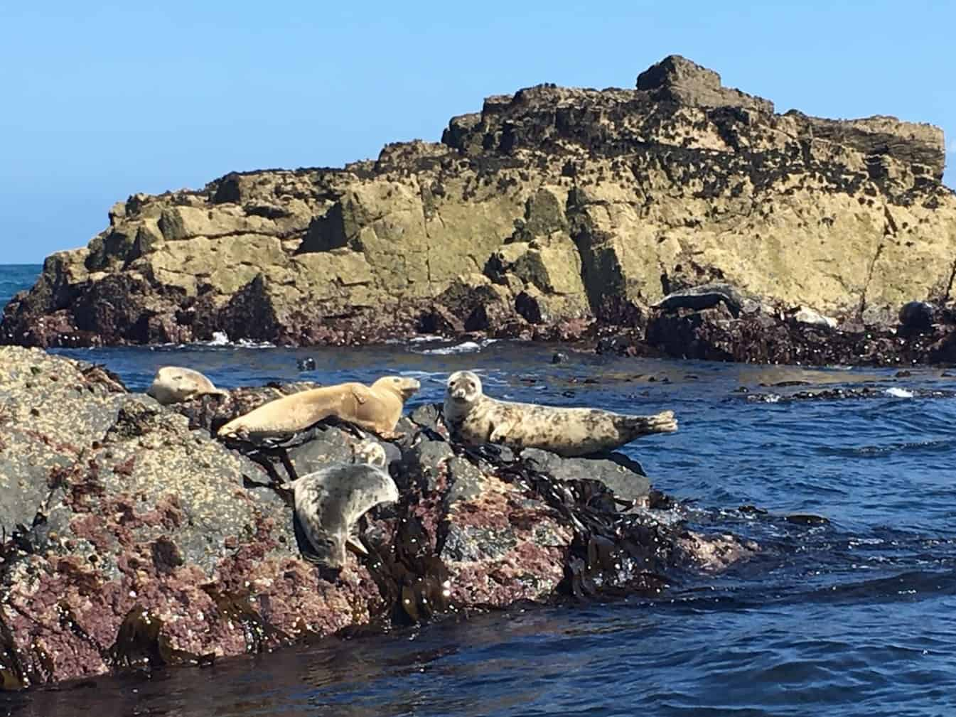 Seal Island, The Western Carracks, Cornish Coast Nr St Ives, Cornwall